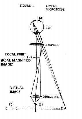 The rife microscope by gary wade figure 1 shows the simplest form of a microscope the object 1 for the objective lens has its image 2 as the object for the eyepiece lens ccuart Image collections